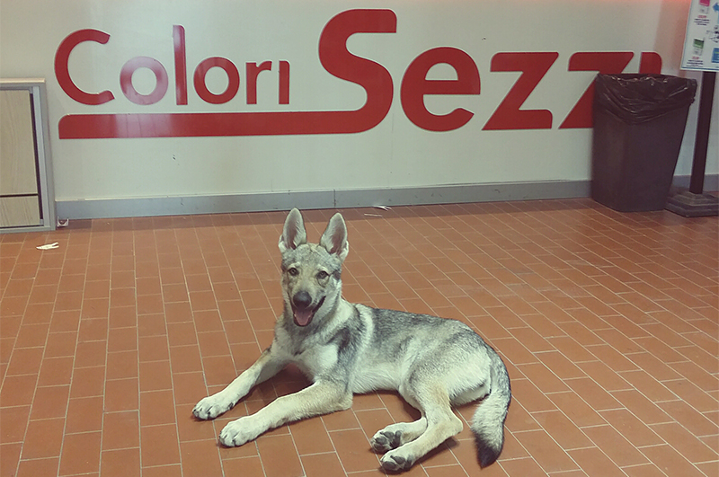 Kiba - Mascotte Team Colori Sezzi Latina